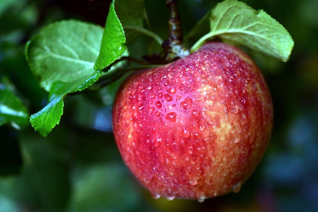 apple-3721206_1920.jpg