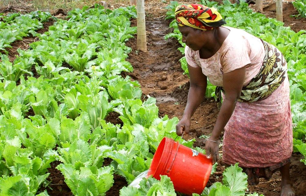 woman-field-farm-food-produce-vegetable-897459-pxhere.com.jpg